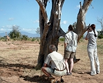 Kiwara privat Safari, Fusspirsch; Tsavo Ost National Park